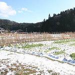 snowgarden1.jpg